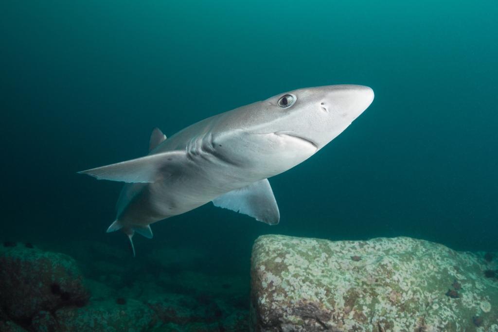 на чёрном море есть акулы времени суток Заказать