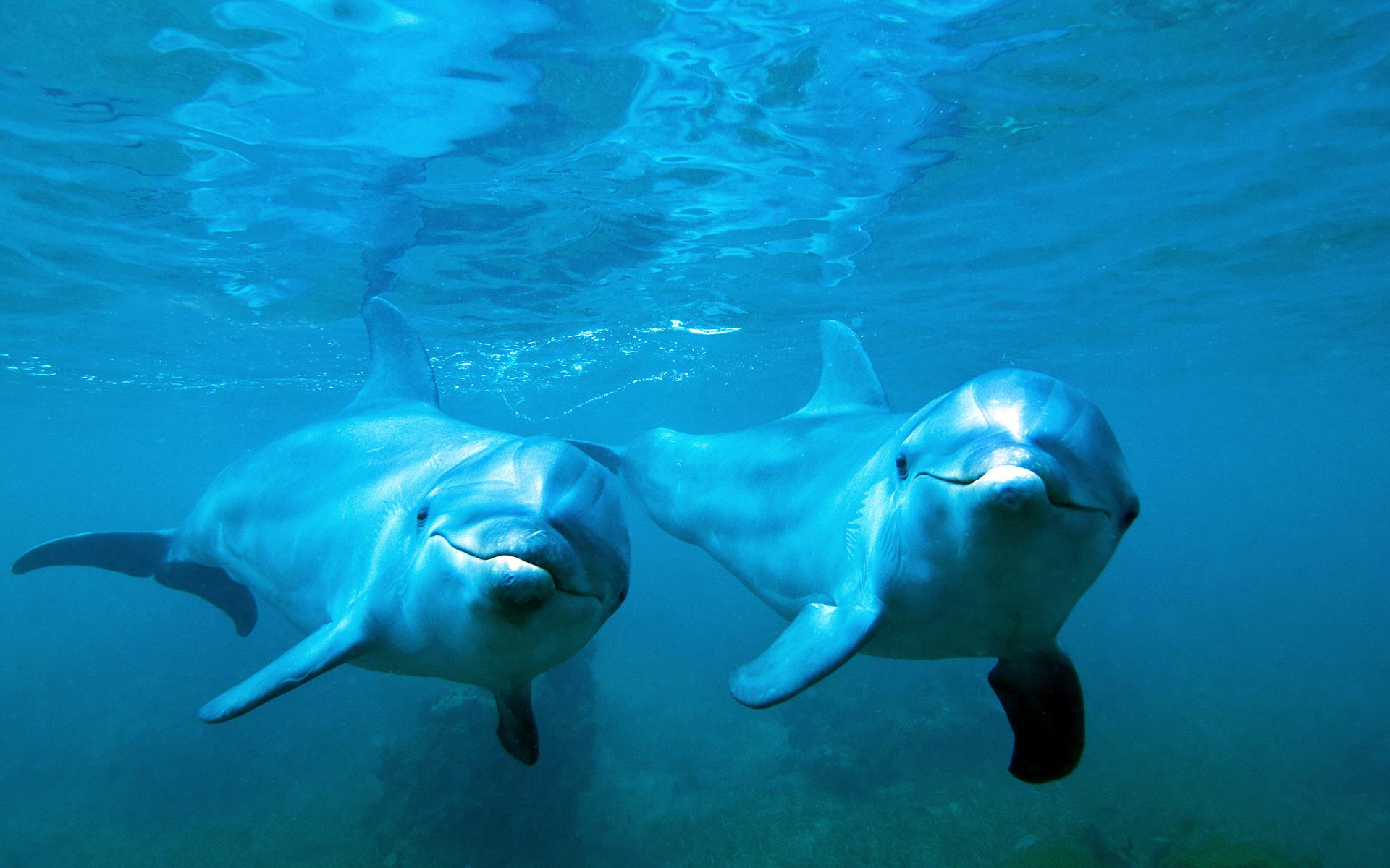 дельфины чёрного моря, афалины