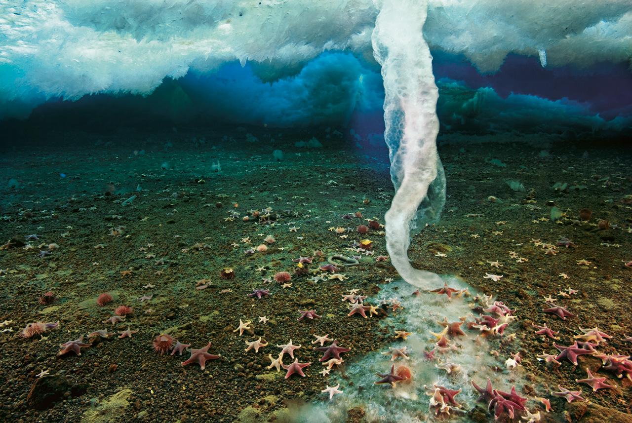 Брайникл тайны океана