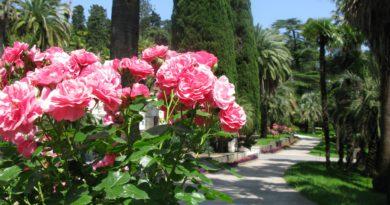 Дендрарий Сочи. Цветы в парке