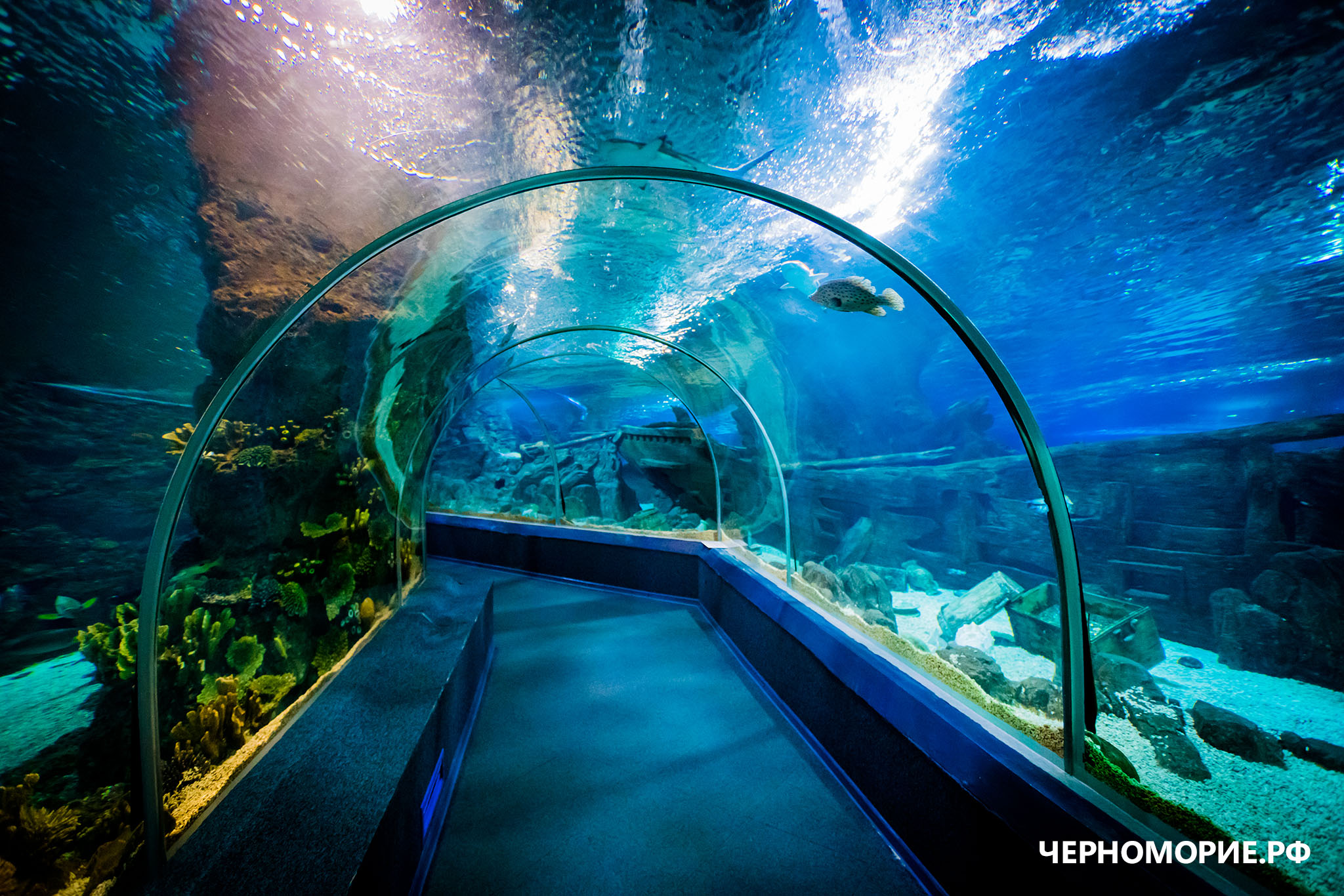 Океанариум в Сочи, тоннель