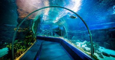 Сочи океанариум Sochi discovery world