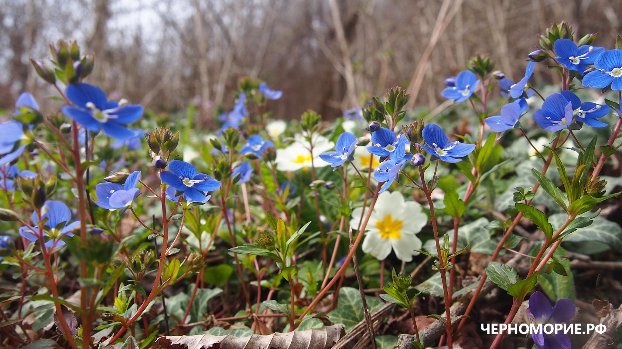 Молодые цветы. Мамедово ущелье