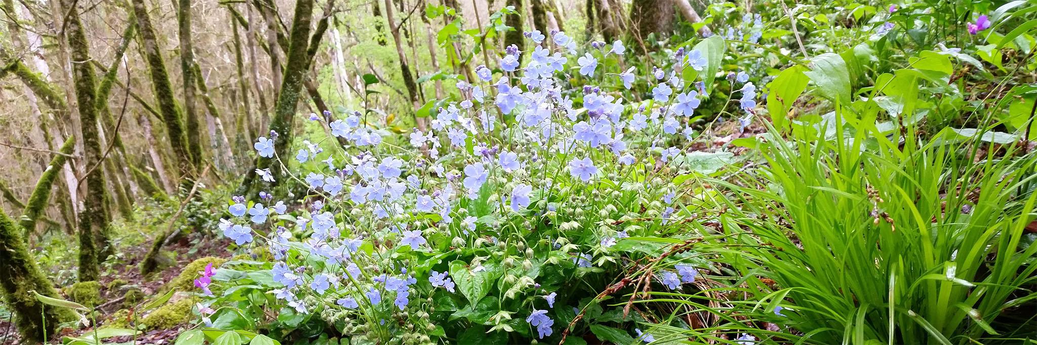 Тисо-самшитовая роща в Сочи, цветы