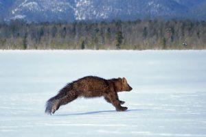 Тест: Угадайте животных России