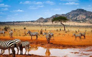 Тест: А вы бы выжили в Африке?