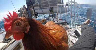 Молодой француз, предпочитающий путешествовать с курицей